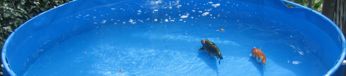 Fish Holding or Quarantine Tank